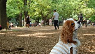 Yoyogi Park - Dog Run