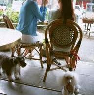 Dog Cafe