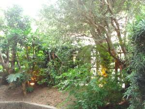 Villa ISIS Minami-aoyama - Garden