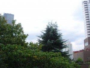Towa Akasaka Apartment - View