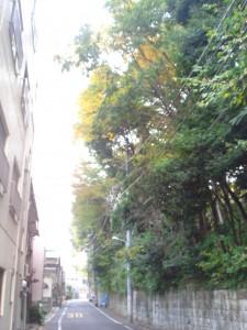 Residia Yoyogikoen - Neighbor