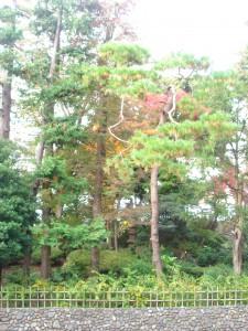 Residia Yoyogikoen - View