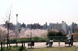 saigoyamapark-1