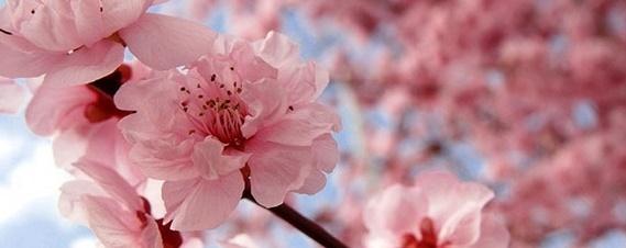 flowerblossom31