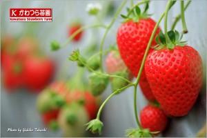 kawatsurastrawberrypick