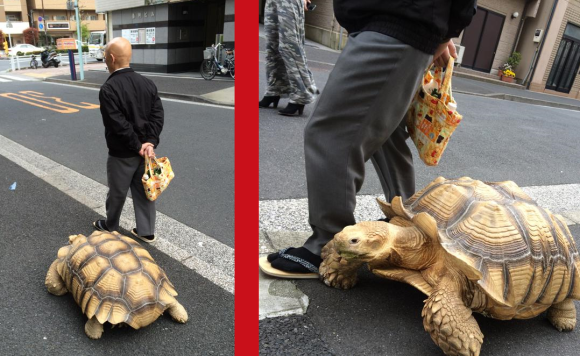 tortoisewalker3